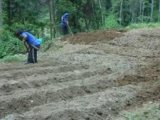 Preparing the bamboo nursery