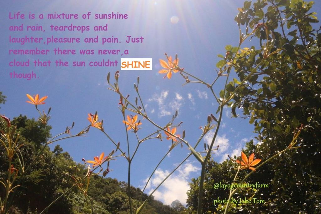sunshine-f